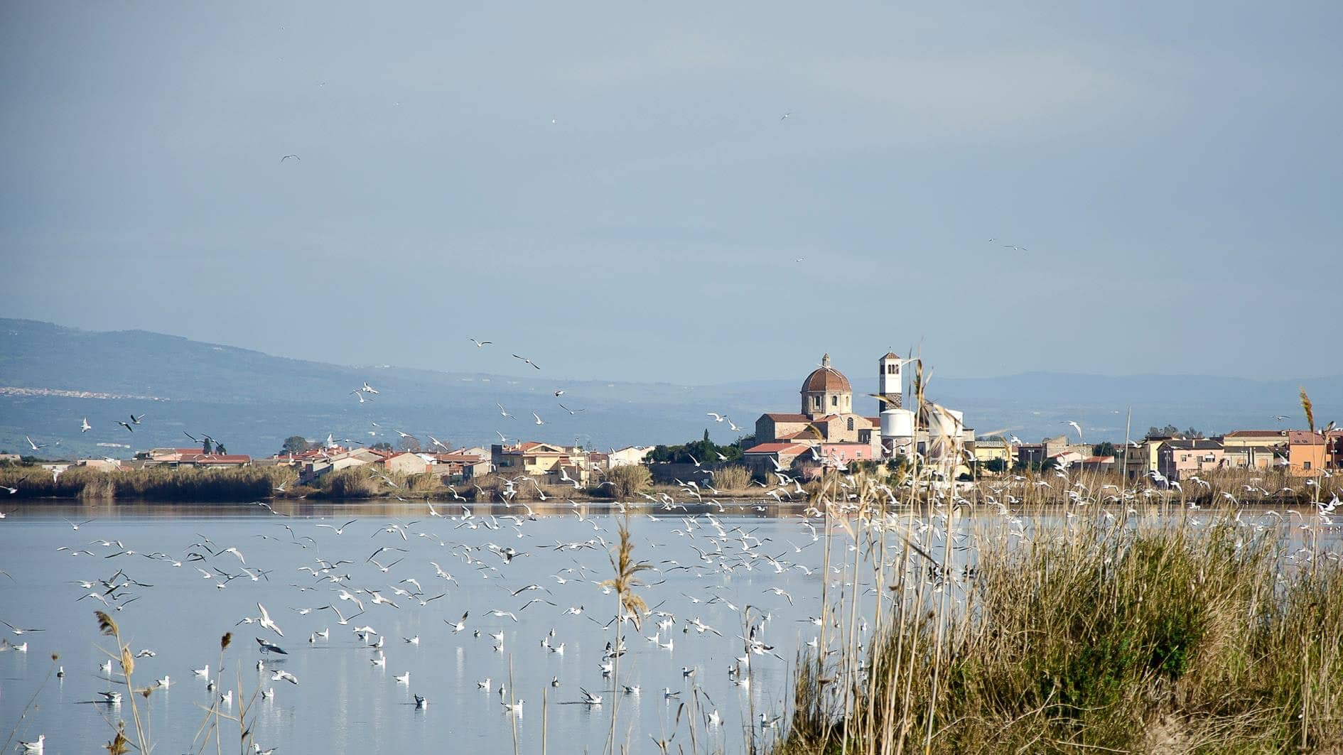 20200301221445cabras-nature-pond-sardinia-241432.jpg