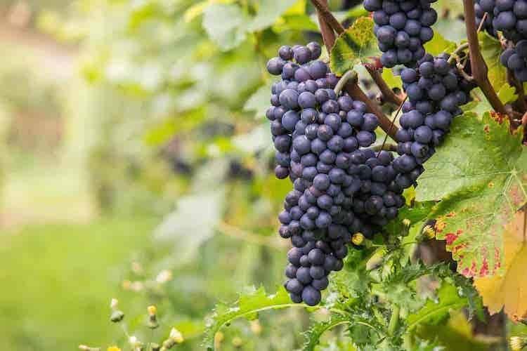 20210208214619standard_compressed_wine-980218_1920.jpg